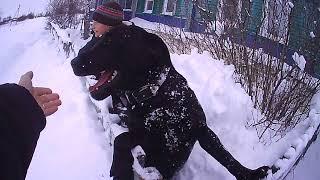 Чистим снег.  Собака бесится.  В первый раз готовим свою домашнею тушенку.