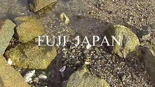 岩ガニ取り 2017