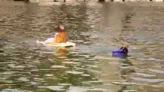 A simulated rescue in the water: Bertín a Spanish Water Dog rescuing a boy