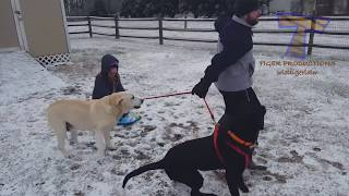 FUNNIEST DOGS in SNOW COMPILATION - Haven't seen better yet! Enjoy watching and LAUGH with us! thumbnail
