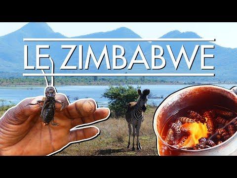 Le Zimbabwe : Grillons Souterrains & Chenilles Arboricoles – LCM #7