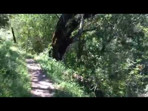 Foothills Park, Palo Alto CA, Los Trancos Trail