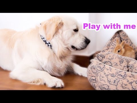 Funny Dog Trying to Play with a Cute Rabbit