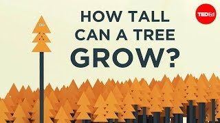 How tall can a tree grow? - Valentin Hammoudi
