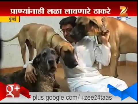 Mumbai : Dog Lover Thackeray`s