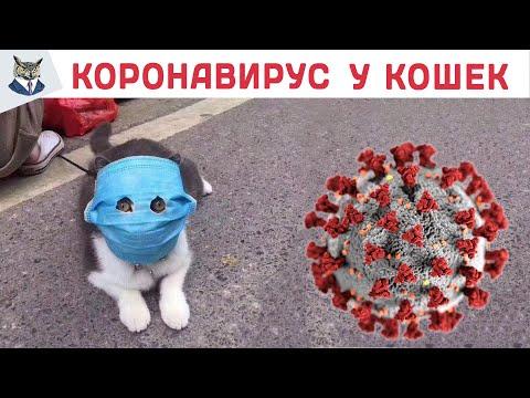 #StayHome Заражает ли коронавирус кошек? Пандемия
