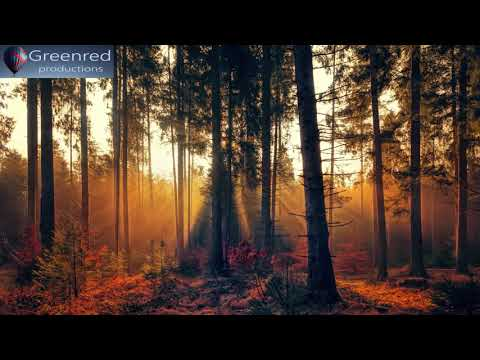 Study Music, Binaural Beats Focus Music, Studying Music, Concentration Music with Brain Waves
