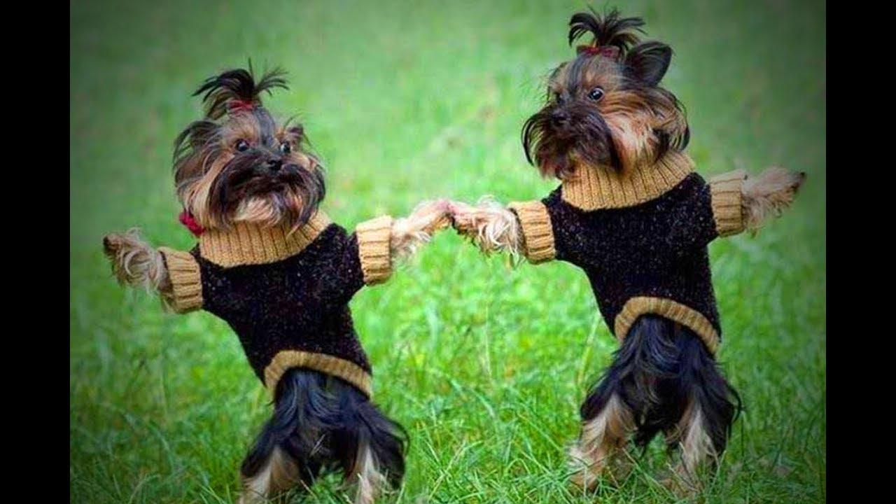 Cute Dancing Dogs