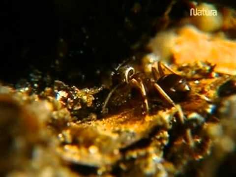 Esas increibles hormigas