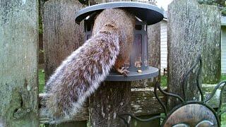 Squirrel nut bin - episode 1
