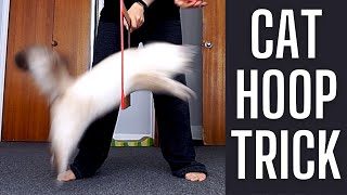 Training A Siberian Kitten To Do Circus Trick