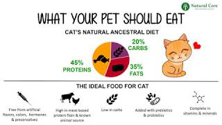 Why Natural Core is the Best Food for Your Cat and Dog?