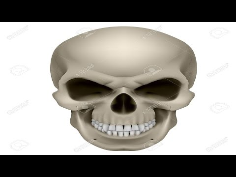 How Many Bones Are There In Human Skull