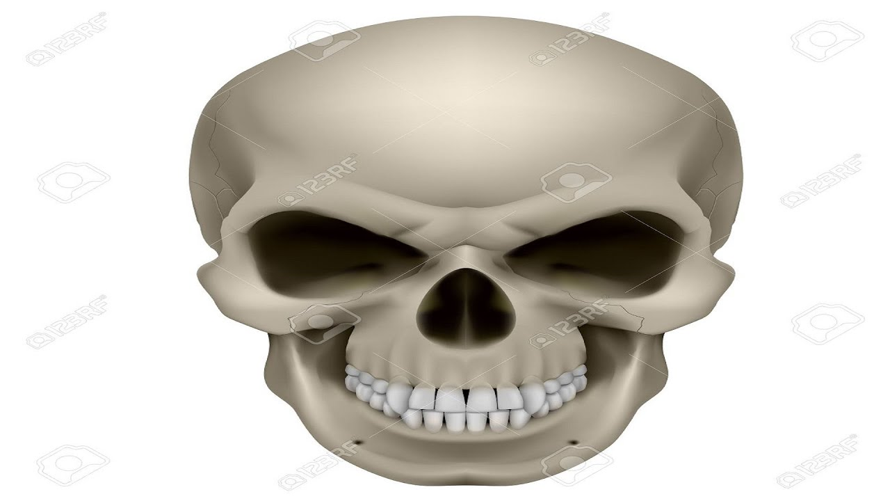 How Many Bones Are There In A Human Skull Youtube