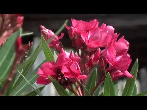 New Sony handycam HD video Wedding flowers background,and composing background  10 thumbnail
