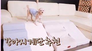 강아지계단/애견스텝추천/애견호텔/견생템/강아지용품추천/…