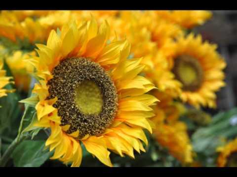 I bellissimi fiori di mantova video di agron - Immagini di fiori tedeschi ...