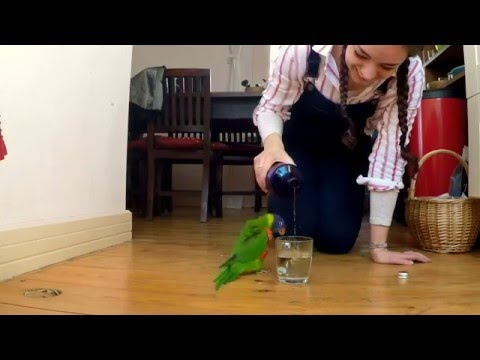Skipping Lorikeet: The Rain Dance Parrot
