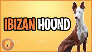 Ibizan Hound Top 10 Facts