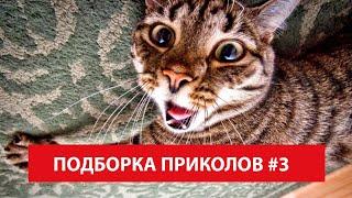 Ну Очень Смешные Приколы с Котами Людьми Собаками Животными Май 2019 - Лучшая Подборка Greenli