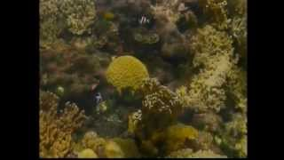 Climate Change Introduction to Reef Videoconferencing Thumbnail