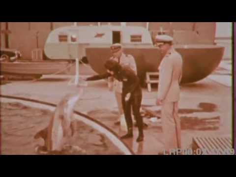 The Dolphins that Joined the Navy (1964)