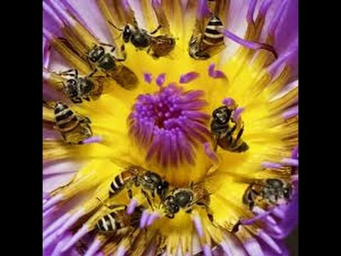 Honeybees, Humans and Pesticides:  A Presentation and Discussion