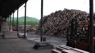 На Дальнем Востоке пресекли контрабанду древесины исчезающих видов (оперативное видео)