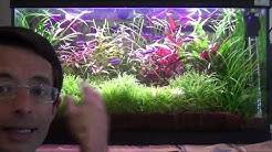 Créer facilement son aquarium hollandais autonome