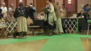 The 2008 Dachshund Club National Specialty Dog Show