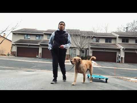 Week 1 Recap | Piper Dog Training | Funtastic K9 Training