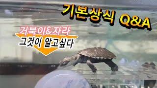 거북이,자라 기본상식 Q&A  [ 그것이알고싶다]