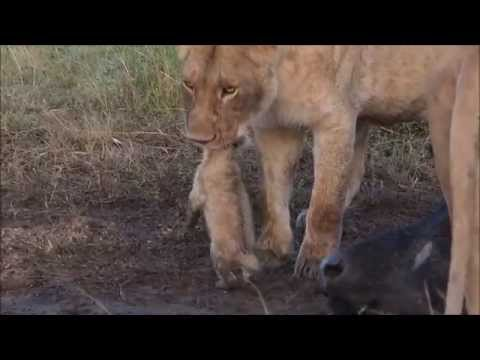 My African Journey: 10 days in the Masai Mara (Part 1)