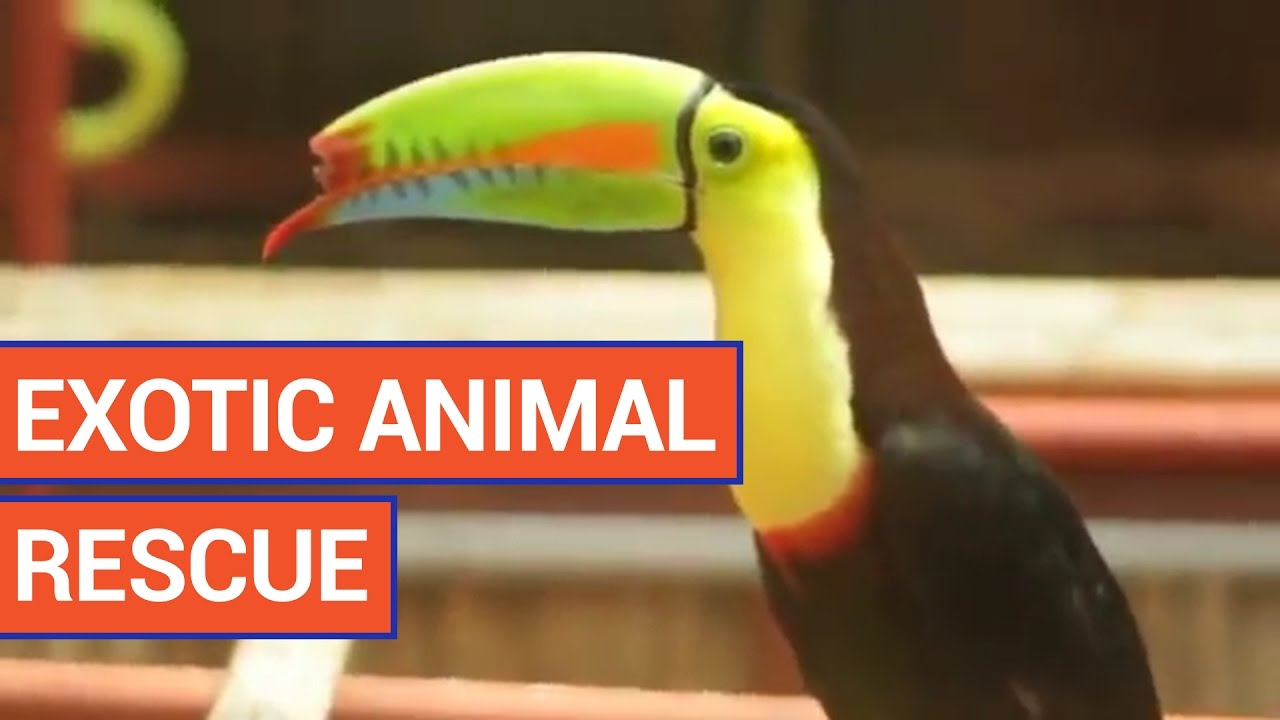 Exotic Pet Rescue Video 2016 | Daily Heart Beat