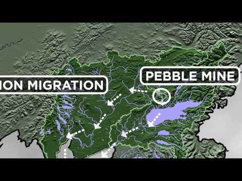 The Pebble Mine