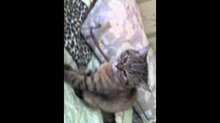Обзор на резинки и любимых котят.(от Виктории)