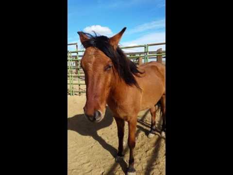 Horse's mane blowing in wind