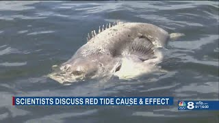Local scientists hold public forum to discuss science behind red tide