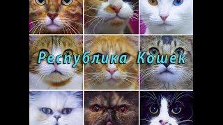 Республика кошек.  Едем по Невскому Проспекту.