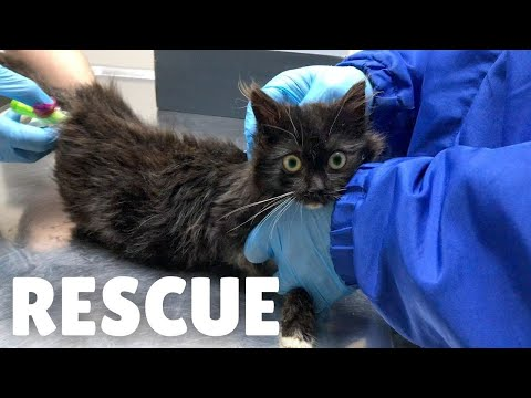 Abandoned sick kitten taken to the vet and adopted.
