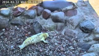Fokarium w Helu na żywo / Webcam - Maszoperia śpi