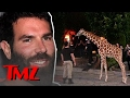 Dan Bilzerian threw another crazy party with tons of baby giraffes … | TMZ