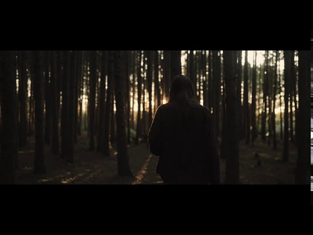 Sounds of the Woods // Short