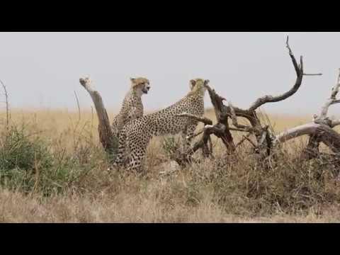 My Trip to Tanzania Part 1 Serengeti