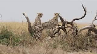 My Trip to Tanzania Part 1 Serengeti
