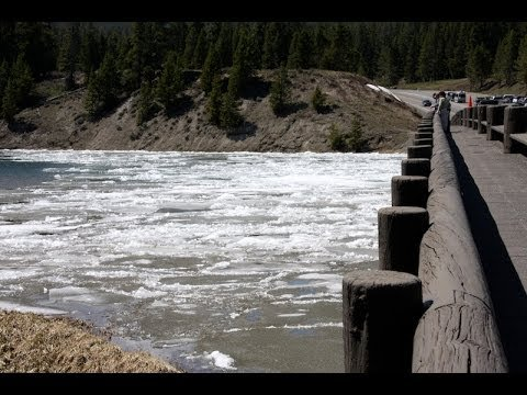Yellowstone Lake and River Ice Jam - The Fishing Bridge