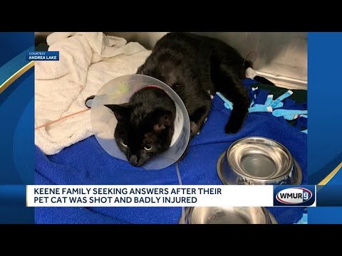 McCabe - Keene, NH Family Cat Shot, Family Doesn't Know How It Happened