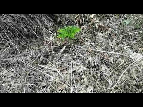 How To:'-2 month waste decomposer Suran