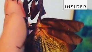 Ghost Mantis Looks Like Fallen Leaves