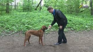 """ОКД, Связь упражнения """"Движение назад"""" с выдержкой и правильной постановкой собаки"""